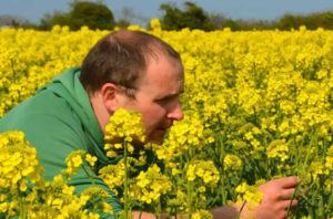 Jack Rogers looking at his rapeseed crop at Newgrange Gold farm.