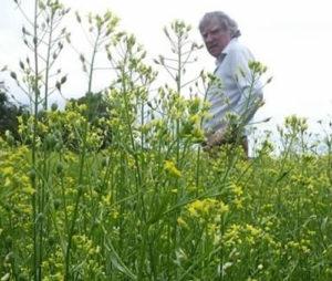 John Rogers looking at field of rape