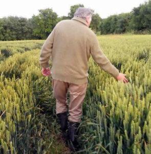 John Rogers In crop