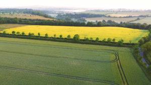 Newgrange Gold field of rapeseed growing
